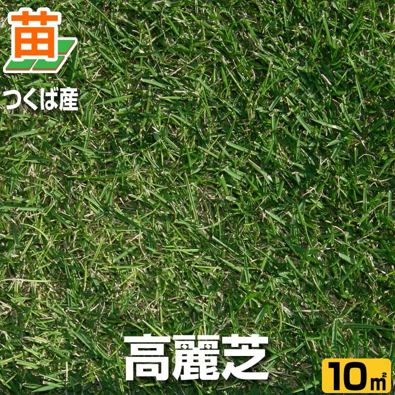 高麗芝(張り芝用) つくば産 10平米(3坪分) 天然芝 園芸 暖地型芝 芝生の苗 送料無料