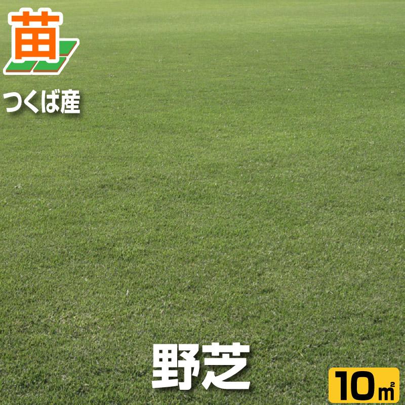 野芝(張り芝用) つくば産 10平米(3坪分) 天然芝 園芸 暖地型芝 芝生の苗 送料無料