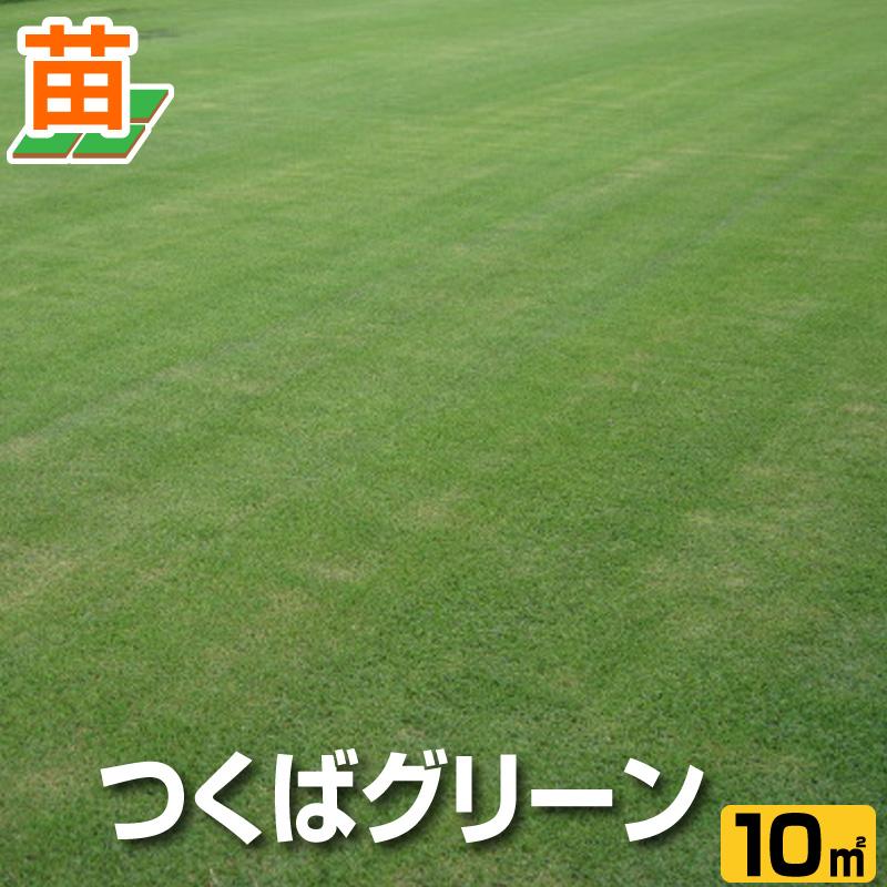 送料無料/つくば産 つくばグリーン(野芝)10平米(3坪分)/ 芝生 暖地型 /天然芝 園芸