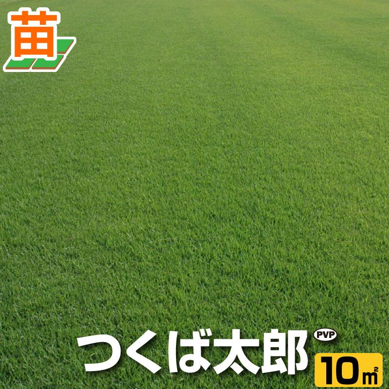 送料無料/つくば産 つくば太郎(野芝)10平米(3坪分)/ 芝生 暖地型 /天然芝 園芸