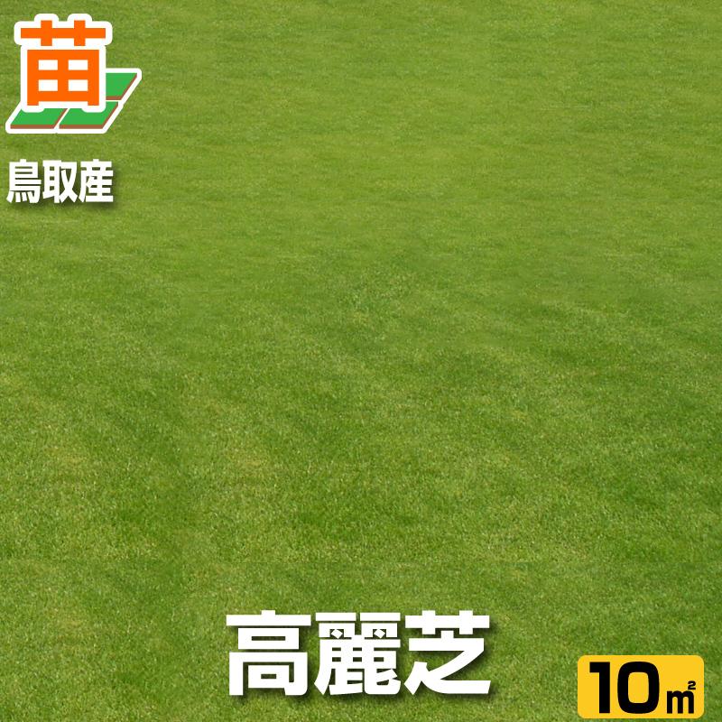 送料無料/鳥取産 高麗芝 10平米(3坪分)(張り芝用)プレミアム苗/ 芝生 暖地型 /天然芝 園芸