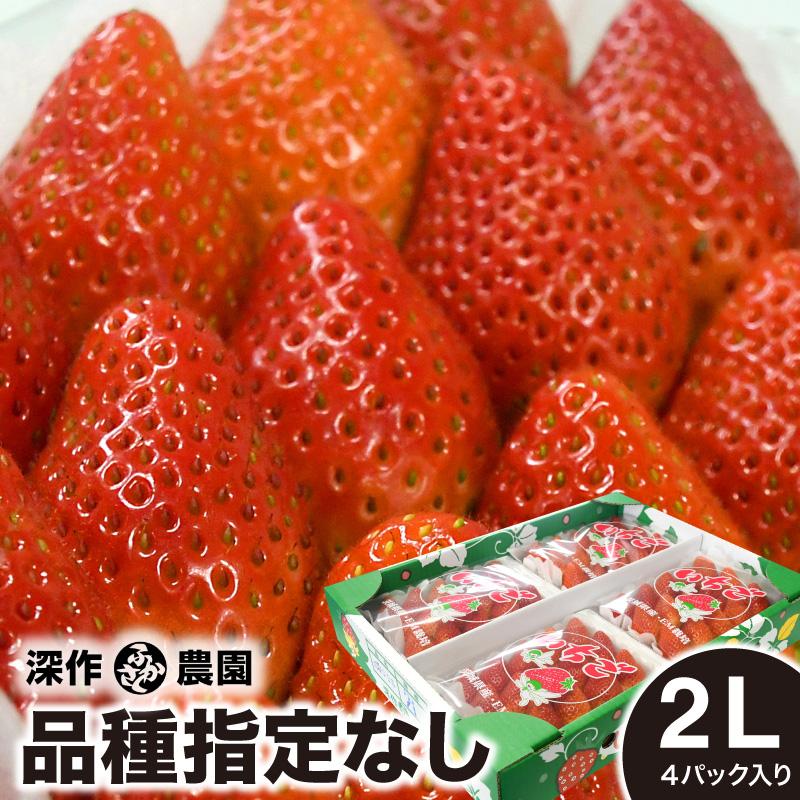 いちご ギフト 品種指定なし 2L×4パック イチゴ 大粒 贈答 ストロベリー 新鮮 苺農家 深作農園