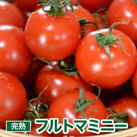フルーツのようにジューシーなミニトマト プチトマト 野菜 とまと SALE開催中 国産 トマトジュース ミニトマト トマト 1.5kg お得 フルトマミニー フルーツトマト お取り寄せ