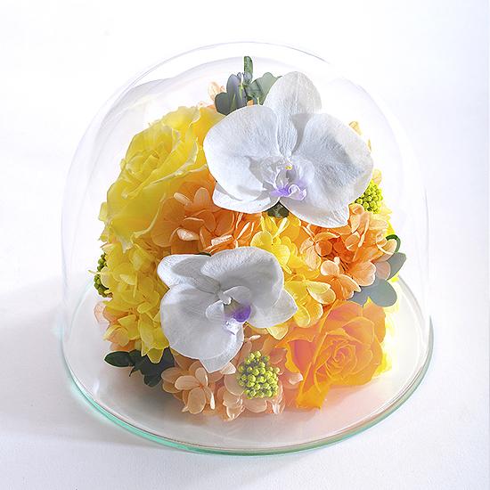 ベル・フルール 胡蝶蘭ガラスドームL