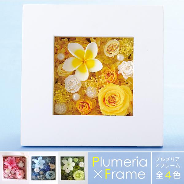 Peserved Flower Belles Fleurs Points 5 Times Plumeria X