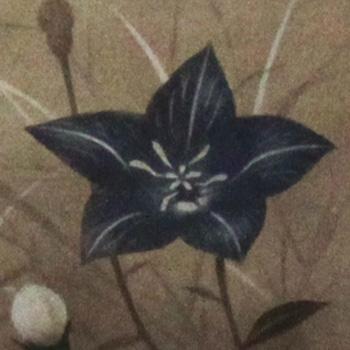 猪飼 正 額付き銅版画(メゾチント) 「桔梗」 1992年