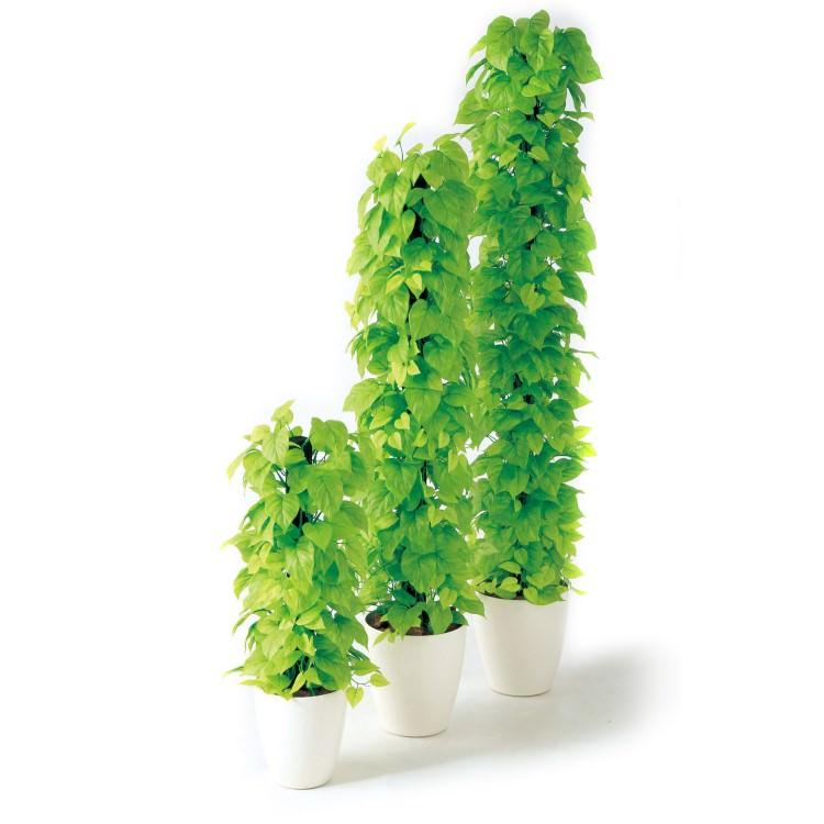 高品質 手間要らず 枯れない 水遣り不要 グリーン フェイクグリーン イミテーショングリーン 造花 人工 観葉植物 鉢付き| ライムポトスヘゴ W33×H150cm|横浜ディスプレイミュージアム TK98641 アーティフィシャルグリーン 人工観葉植物 鉢付きグリーン 造花 おしゃれ 上質 上品 高級 ゴージャス リビング サロン ホール