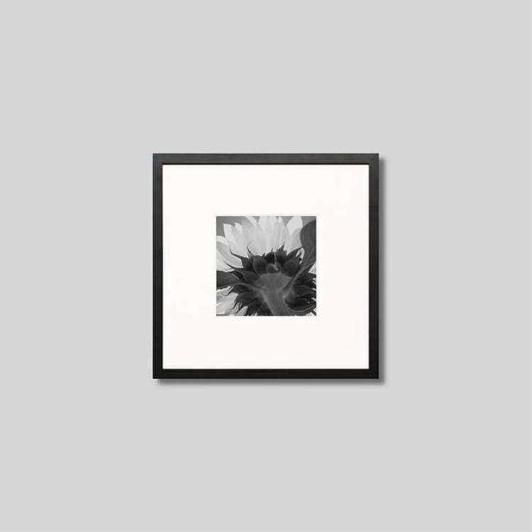ウッド黒フレーム 発売モデル 正方形Sサイズ インテリア 大人気 アート フォト プロ作品 デザイナー デザイン フォトグラフ 豊かなおうち時間 男前インテリア ピクチャーアート アイグレボウ インテリアフォト スタイリッシュ モノクロ モノクローム ひまわりの花 モダン 写真 IGREBOW