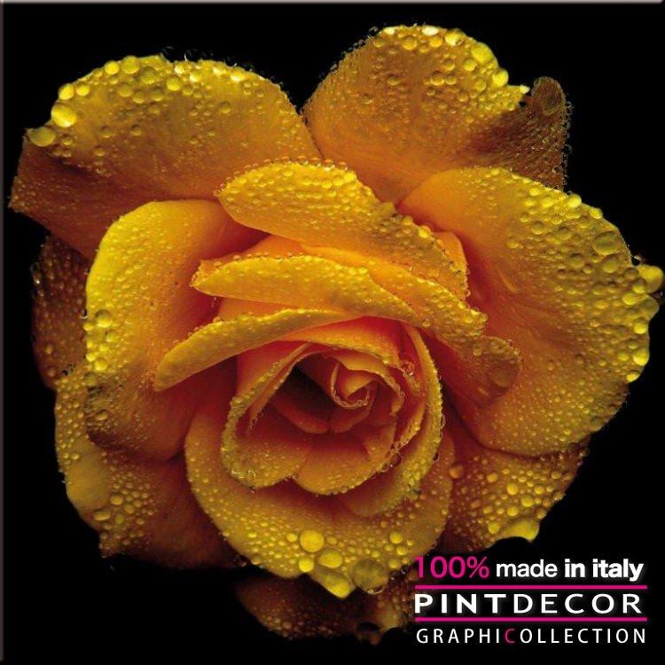 デコレーションパネル PINTDECOR グラフィコレクション ROSA GIALLA G5162|ピントデコール イタリア アートパネル ウォールデコ ペインティング 絵画 リビング インテリア デザイン モダン ホテルライク 新居 イタリア直輸入