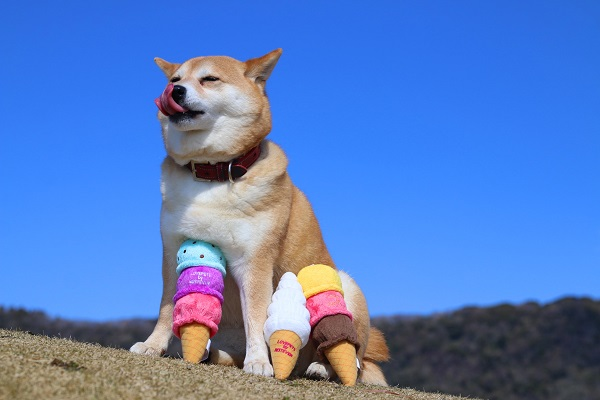 icecreamshiba