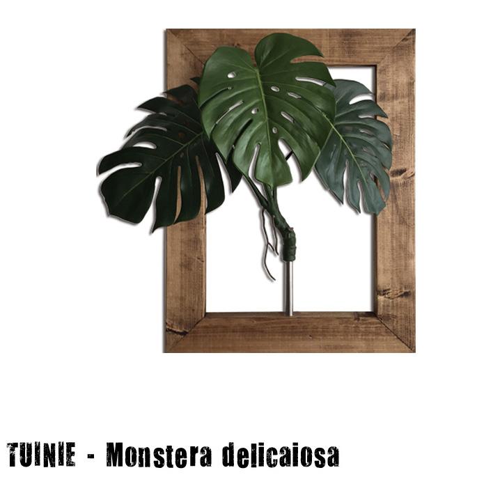 プラントフレームTUINIE ITN52399 Monstera deliciosa(モンステラデリシオサ) JIG(ジェイアイジー)