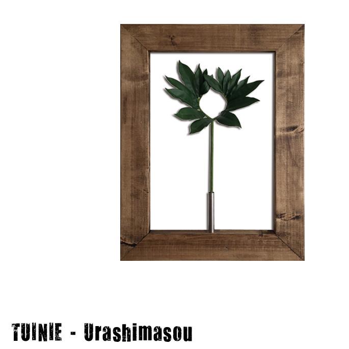 プラントフレームTUINIE ITN52401 Urashimasou(ウラシマソウ) JIG(ジェイアイジー)