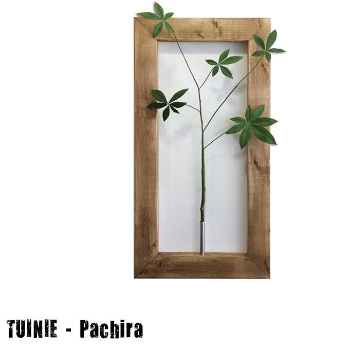 プラントフレームTUINIE ITN52438 Pachira(パキラ) JIG(ジェイアイジー)