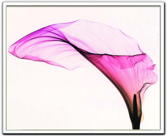 アートフレーム スティーブン・マイヤーズ Steven N.Meyers Giant Calla ism-14128 絵画 壁掛け おしゃれ