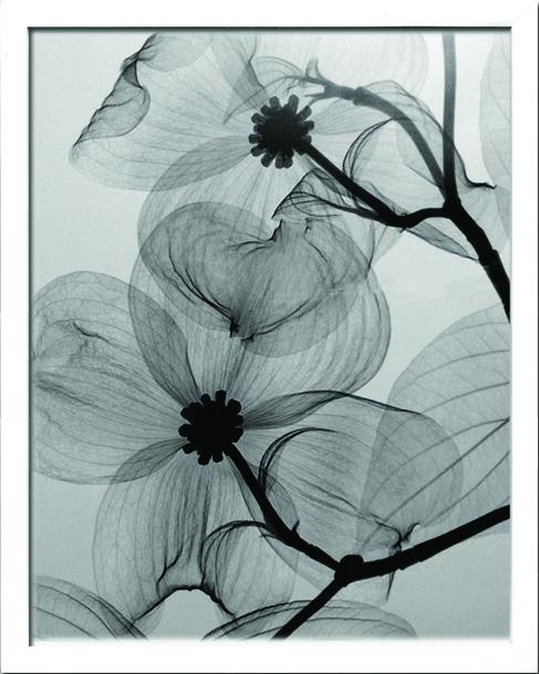 アートフレーム スティーブン・マイヤーズ Steven N.Meyers Dogwood Blossoms ism-14209 絵画 壁掛け おしゃれ