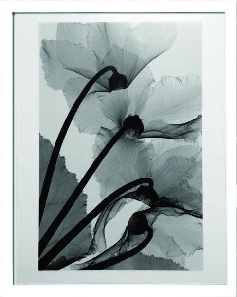 アートフレーム スティーブン・メイヤーズ Steven N.Meyers Cyclamen Study 4 ism-14211 絵画 壁掛け おしゃれ 送料無料