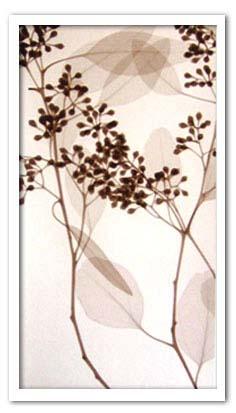 アートフレーム スティーブン・メイヤーズ Steven N.Meyers Eucalyptus III ism-14292 絵画 壁掛け おしゃれ 送料無料