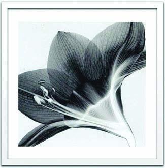 アートフレーム スティーブン・メイヤーズ Steven N.Meyers Amaryllis 2 ism-14326 絵画 壁掛け おしゃれ 送料無料