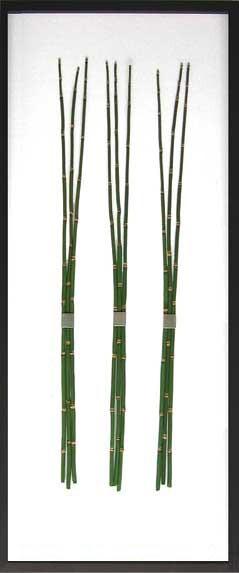 リーフアート エクイセトゥム F-style Frame Equisetum hyemale iff-10019 壁掛け おしゃれ グリーン 葉っぱ 観葉植物 透明 送料無料