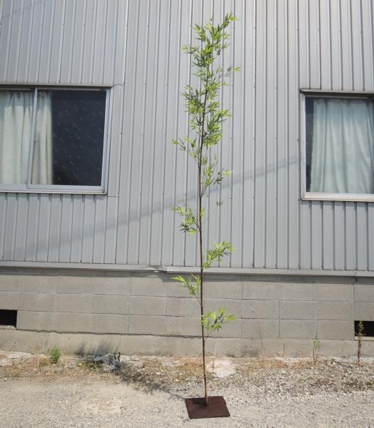 激安挑戦中 和風の人工竹 造花 観葉植物 フェイクバンブー 大型サイズ 人工竹 黒竹 バンブーツリー2.7m コンパネベース H270cm 海外限定 インテリア