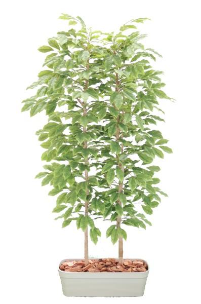 チェリーの木のパーテーション 造花の間仕切 チェリーの木パーテーション180cm [並行輸入品] 間仕切 フェイク 造花 返品交換不可 インテリア 人工観葉植物 室内 おしゃれ 装飾 サクランボ 1.8m ディスプレイ
