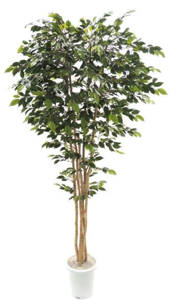 ナチュラルベンジャミン 上広がりバージョン (人工 観葉植物 造花 200cm)