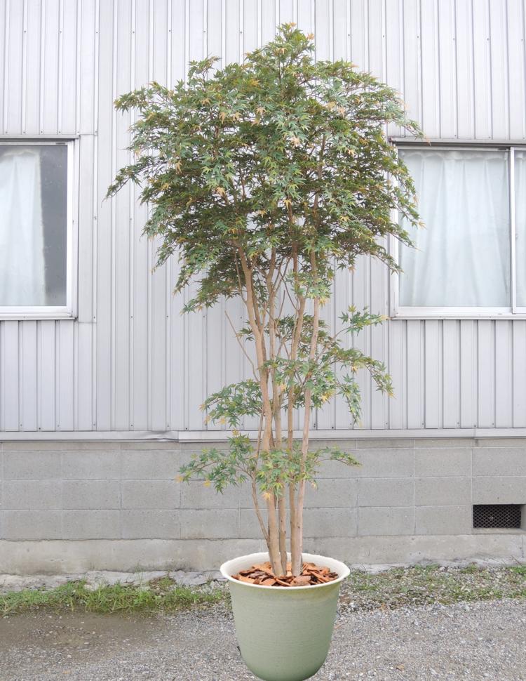 大型サイズの紅葉立ち木 高さ300cm(モミジ 緑 人工観葉植物 造花 もみじ 造木 グリーン インテリア おしゃれ 室内)