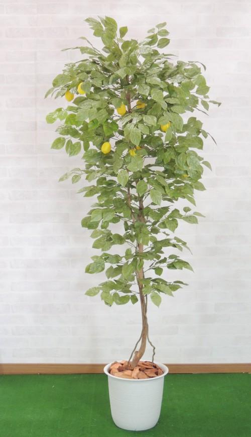 最新 レモンの木 実付 180cm (人工観葉植物 造花 ディスプレイ) 人工樹木 造花 フェイクグリーン 1.8m おしゃれ 人工樹木 室内 装飾 作り物 ディスプレイ):造花観葉植物専門店ビワールデコ, イチカワシ:b3eccfda --- biz4u.ru