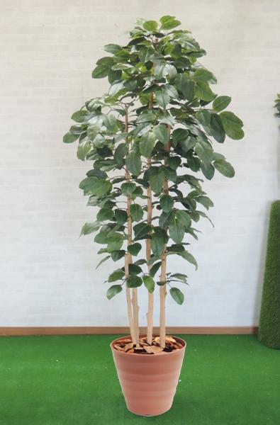 ベンガレンシス 造花 インテリア おしゃれ 新作通販 室内 人工 観葉植物 大型 作り物 飾り 230cm 大好評です ディスプレイ 菩提樹 装飾 ボダイジュ 店舗