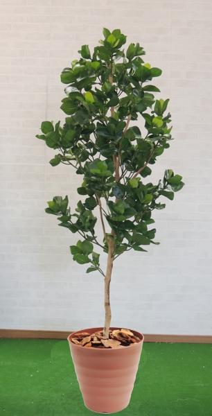 造花 インテリア おしゃれ 室内 人工 観葉植物 大型 装飾 飾り 作り物 2.1m 定番スタイル クルシア210cm グリーン トラスト プランツ フェイク