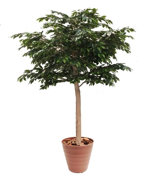 大型サイズのベンジャミン立ち木 高さ260cm 組み立て式(人工観葉植物 造花 樹木 造木)