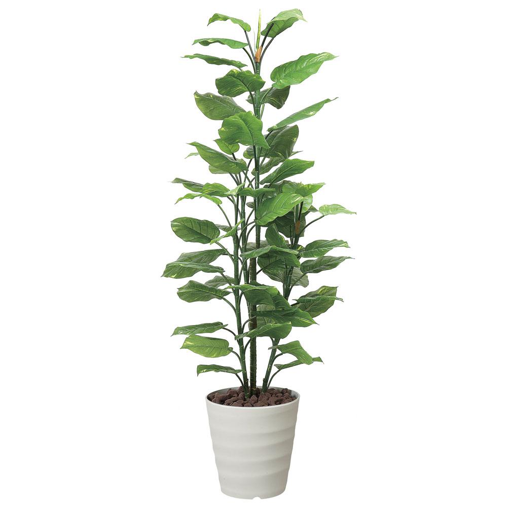 植物 開院 祝い 観葉