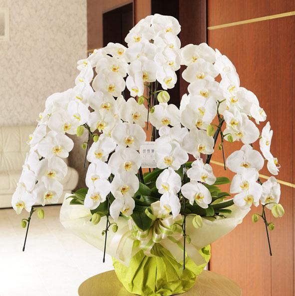 開店祝いのお祝い花や社長への就任祝いや結婚式のお祝い花に!高級胡蝶蘭 7本立(白) 7万コース 【全国送料無料】
