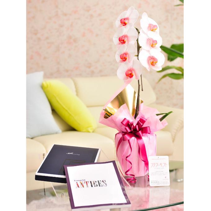 花とギフトのセット 選べる花色のカラー胡蝶蘭 彩 -irodori- 1本立(暖色系)とカタログギフト(ミストラル/アンティーブ)結婚祝い 就任祝い 退職 誕生日 贈り物 フラワーギフト プレゼント ギフトカタログ お祝い お花 送料無料 メッセージカード無料 あす楽