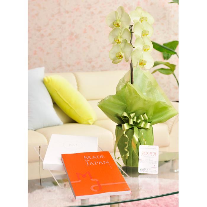 花とギフトのセット 選べる花色のカラー胡蝶蘭 彩 -irodori- 1本立(寒色系)とこだわりのカタログギフト(メイドインジャパン/MJ16)結婚祝い 就任祝い 贈り物 フラワーギフト プレゼント ギフトカタログ お祝い お花 送料無料 メッセージカード無料 あす楽