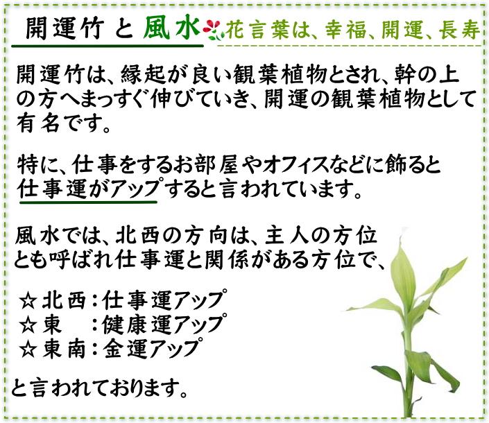 Happy good luck bamboo lucky 7 ¥ 7777 nett square black pottery Bowl
