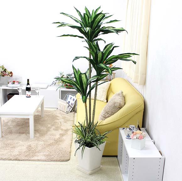 【光触媒】 人工 幸福の木 約1.5~1.6m オリジナル寄せ植え仕立て スクエアホワイト鉢+鉢皿