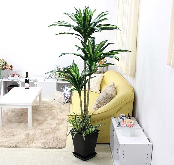 【光触媒】 人工 幸福の木 約1.5~1.6m オリジナル寄せ植え仕立て スクエアブラック鉢+鉢皿
