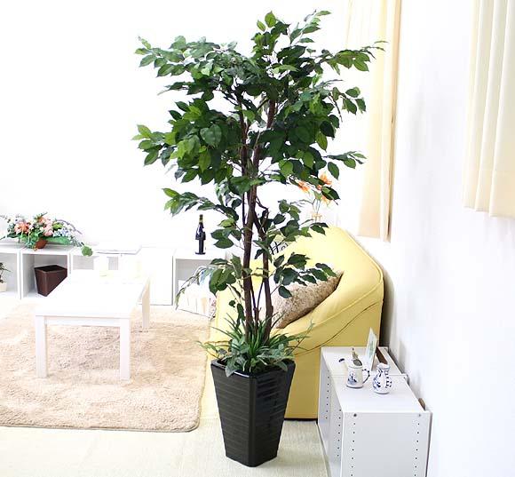 【光触媒】人工 ベンジャミン 約1.6m オリジナル寄せ植え仕立て+ブラック陶器鉢カバー Gタイプ