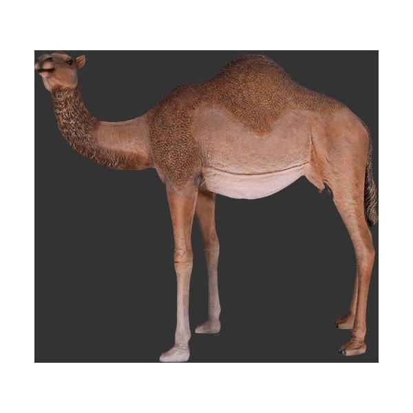 代引不可-アニマルビッグフィギュアシリーズ【ラクダ(駱駝)C】らくだ 雌 camel (等身大フィギュア)送料別途見積