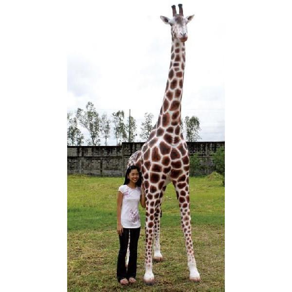 キリン、きりん、麒麟、giraff【親キリン】-アニマルビッグフィギュアシリーズ(等身大フィギュア)代引不可送料別途見積
