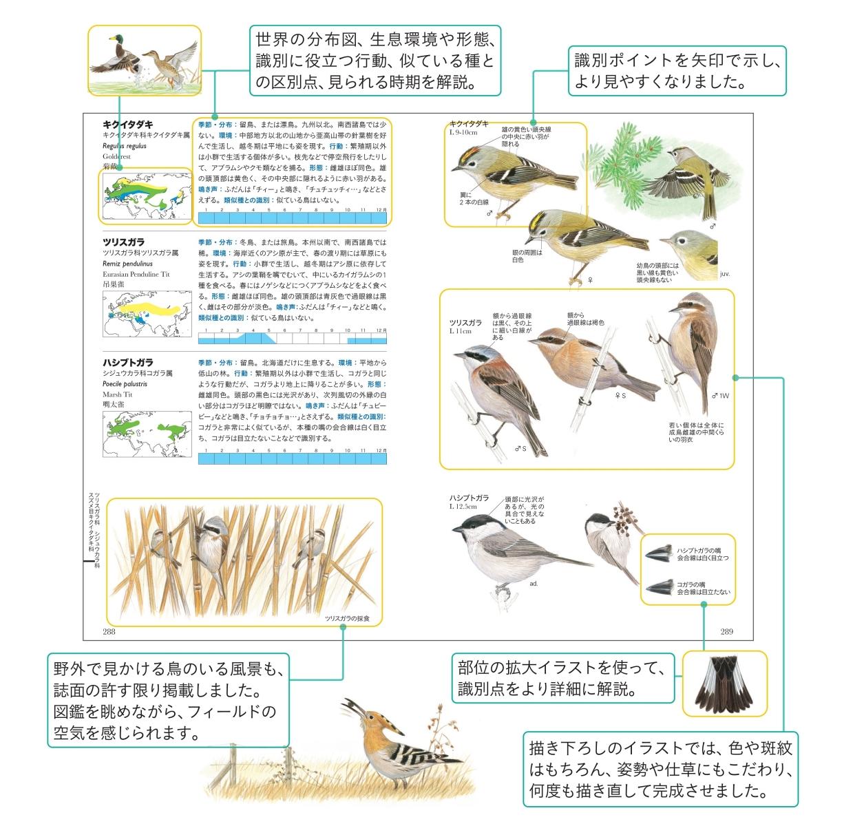 楽天ブックス: フィールド図鑑 日本の野鳥 第2版 - 水谷高英 ...