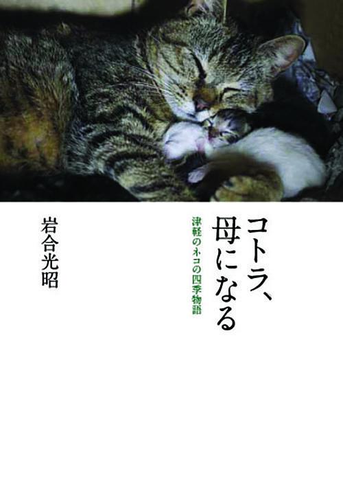 超激安 コトラ 母になる 津軽のネコの四季物語 18%OFF 岩合光昭 1000円以上送料無料