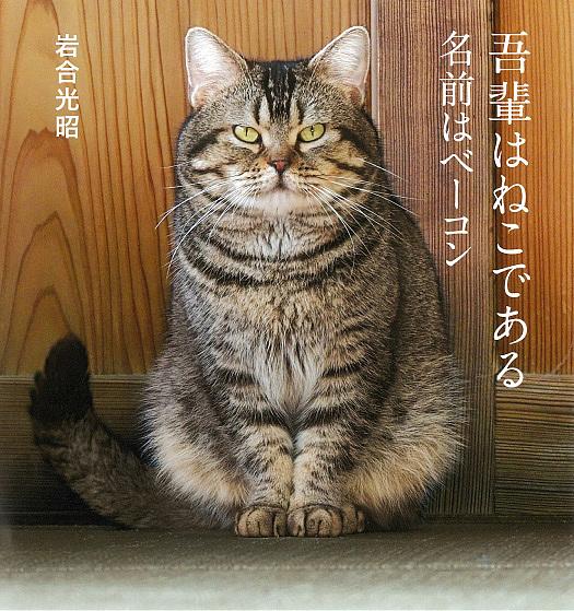 IWAGO'S BOOK ついに再販開始 6 吾輩はねこである 名前はベーコン 1000円以上送料無料 岩合光昭 通販 激安