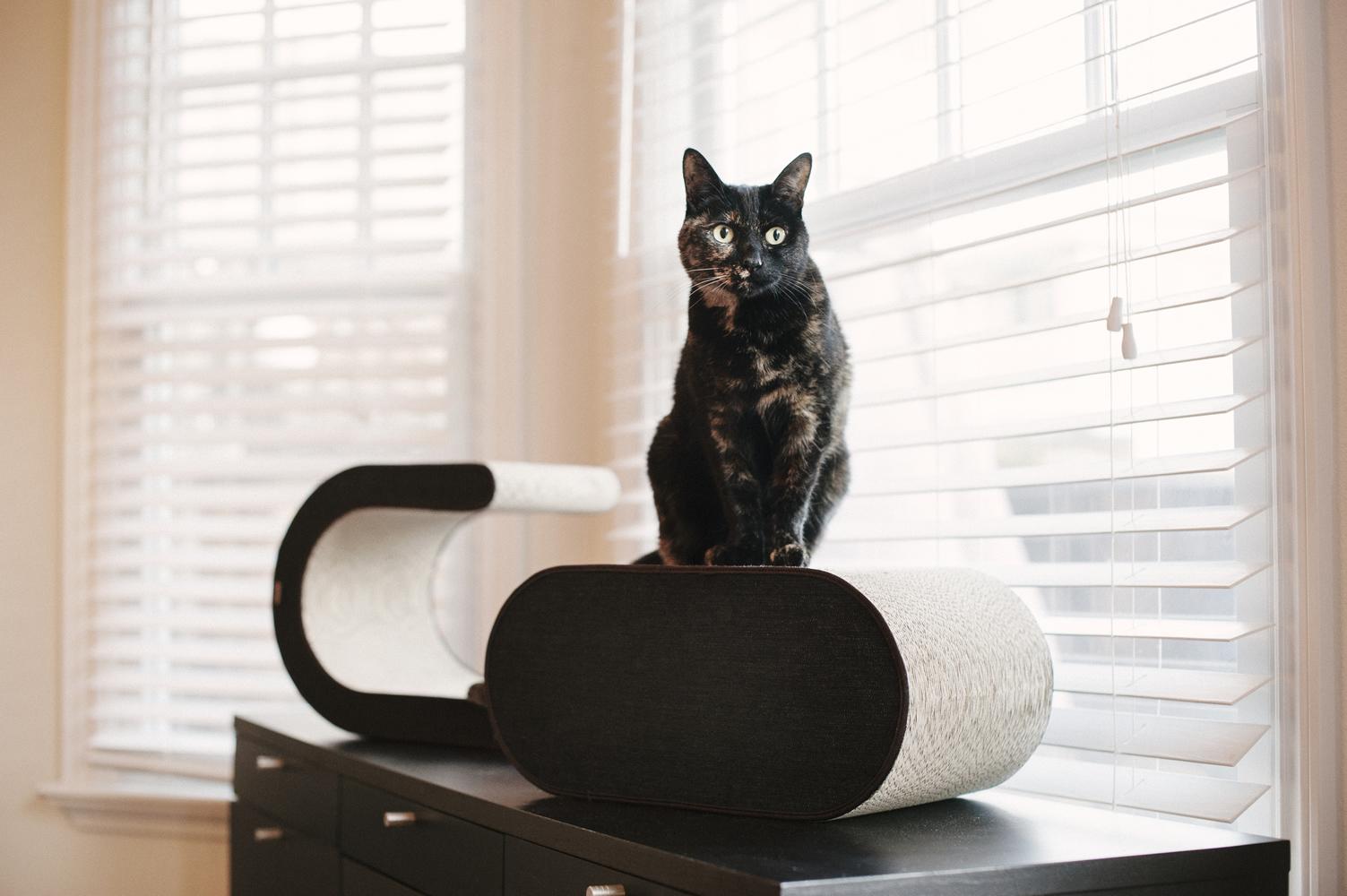 【送料無料】おしゃれな猫用つめとぎ 『P.L.A.Y』  キャットスクラッチャー アーバンデニム チョコレート  【猫/おもちゃ/爪とぎ/高品質】