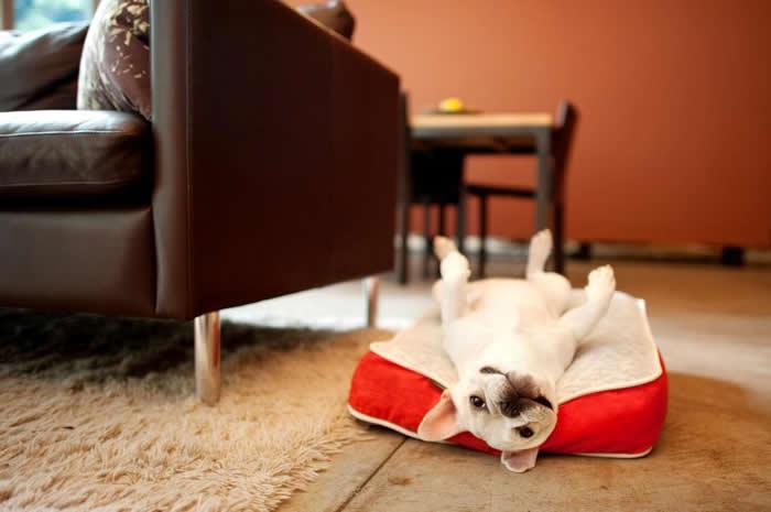 ペットの体重を支える長方形型ペットベッド P.L.A.Y レクトベッド セレンゲティ [ホワイト] Lサイズ 【ペット/ベッド/クッション】