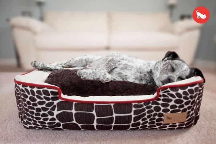最高フィット感 清潔感 デザインのペット用ベッド品質にこだわったラグジュアリーベッド 送料無料 P.L.A.Y ラウンジベッド Mサイズ ペット ブラウン 海外輸入 ベッド 推奨 カラハリ クッション