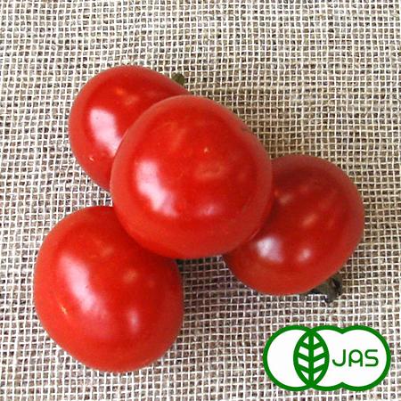 無農薬 豊富な品 JAS有機栽培 小さくたってトマトに負けない栄養価 有機栽培 ミニトマト 100g 2020春夏新作