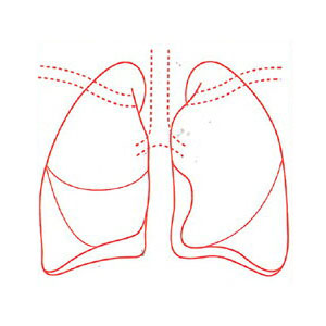 [12/20限定 Wエントリーでポイント14倍] シャチハタ 医療用人体図 「肺」 角型印50号(50x50mm)病院/医院/整骨院/ゴム印/スタンプ