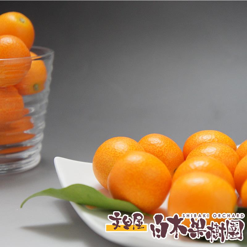 ハウス栽培で 生でそのまま食べられる甘いおいしい金柑です 贈与 正規販売店 高知産フルーツきんかん6パックセット